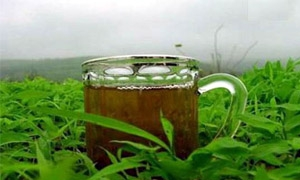 السعودية ثاني أكبر مستهلك للشاي في العالم