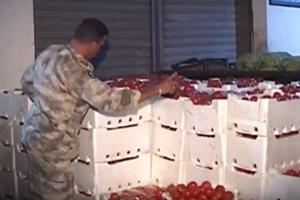 بعد البطاطا.. ضبط أطنان من البندورة السورية المهربة في الأسواق اللبنانية