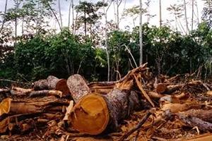 غرامات تصل إلى 200 ألف ليرة لكل من ينقل أو يقطع الأشجار المثمرة دون ترخيص