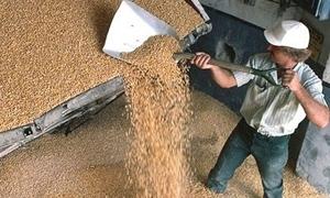 وزير :روسيا تعتزم زيادة متوسط حجم محصولها السنوي من الحبوب إلى 120 مليون طن
