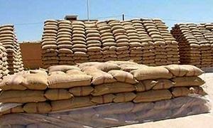 مؤسسة إكثار البذار تخطط لإنتاج 200 ألف طن قمح