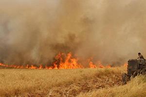 الحريق يضرب أكثر من 66 ألف هكتار من المحاصيل الزراعية في سورية..القمح الأكثر تضرراً