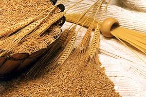 نحو 3.2 مليون طن حاجة سورية من القمح سنوياً.. والإنتاج تراجع 40 بالمئة