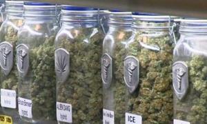الماريجوانا تحقق مبيعات بأكثر من مليون دولار في اليوم الثاني لتشريعها في كولورادو