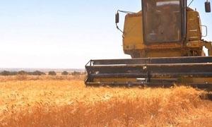 منظمة الفاو: تراجع سعر الغذاء ونمو مخزون الحبوب