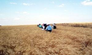 الزراعة: أكثر من ملياري ليرة أنفقت خلال الربع الأول من العام لدعم المحاصيل الإستراتيجية