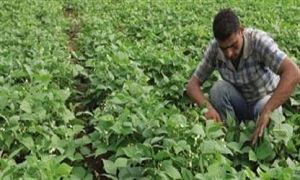 وزارة الزراعة تدرج 39 مشرعاً زراعياً في خطتها للعام القادم