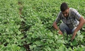 اتحاد المصدرين يوزع بذراً للخضار لزراعة مليون متر مربع في ريف دمشق